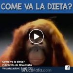 Video Divertenti: Come va la dieta?