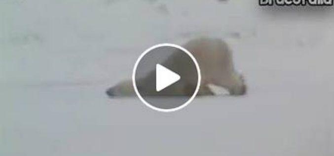 Video Divertenti: Lunedì mattina