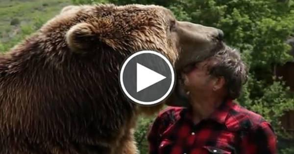 Orso Grizzly che gioca e vive con un uomo