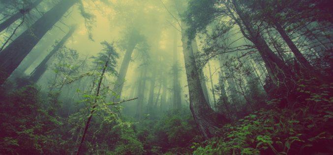 Hilofobia o xilofobia: la paura degli alberi e del legno
