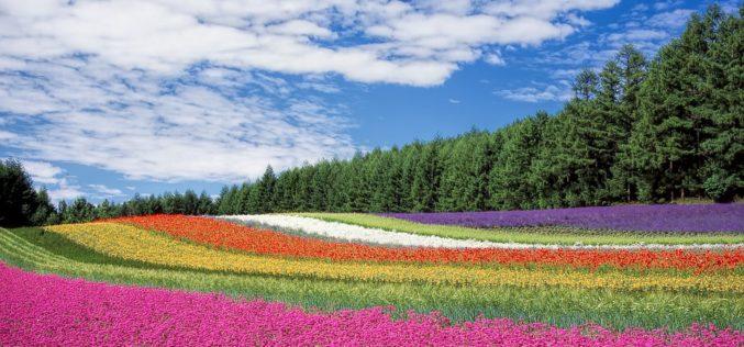 Cromatofobia: la paura dei colori