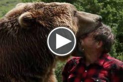 Orso-Grizzly-gioca-vive-con-uomo.jpg
