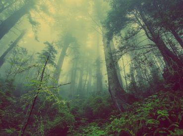 paura-degli-alberi-hilofobia-xilofobia.jpg