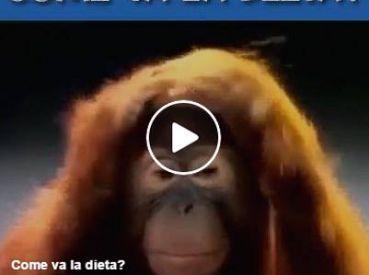 video-divertenti-come-va-la-dieta.jpg